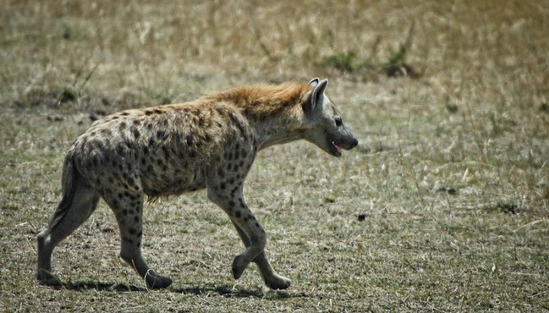 kenia-1585