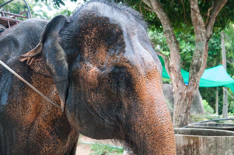 thailand-2013-171