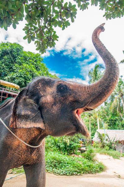 thailand-2013-174