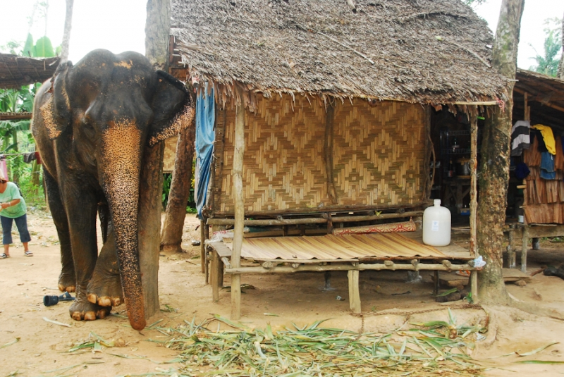 Elephant-Camp bei Ao Nang
