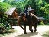 Dschungel-Tour